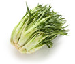puntarelle, asparagus chicory, italian winter vegetable