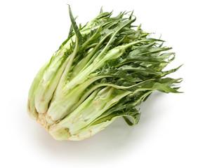 puntarelle, asparagus chicory, italian winter vegetable