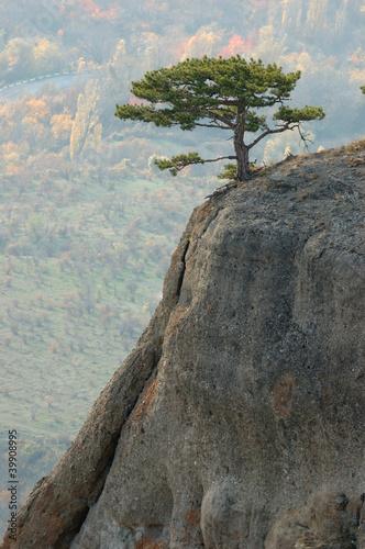 Pine trees at Demirji rocks, Ghost valley, UKraine