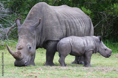 Foto op Canvas Neushoorn Baby Rhinoceros and Mom