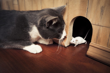 Cat staring at a mouse coming out of it's hole