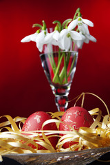 easters eggs, snowdrops, colored background,
