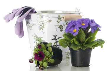 Blumen einpflanzen