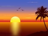 Fototapety Sunset with palmtree silhouette