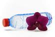wasserflasche mit orchidee