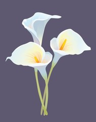 """""""Bouquet from three callas"""""""