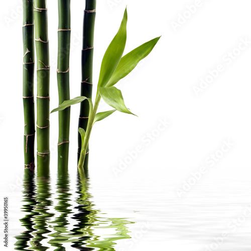 Młoda Spouting bambus zrefleksji