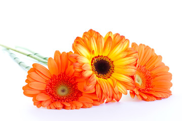 The bouquet of opange gerbera