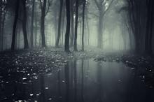 "Постер, картина, фотообои ""pond in a forest with fog"""