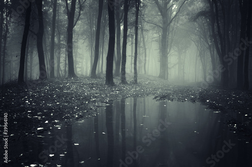 pond in a forest with fog - 39964140
