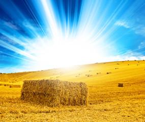 sunshine haystack