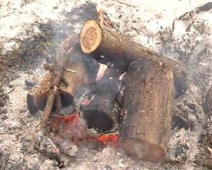 closeup tree branch burn fireplace coal cinder fire smoke winter
