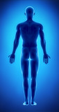 Male figure in anatomical position posterior  view poster