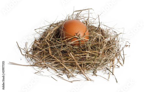 Brown egg in nest isolated on white