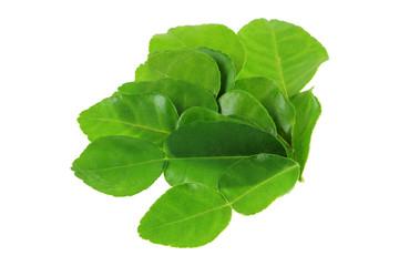 Fresh Kaffir Lime,  ingredient to make Asian food