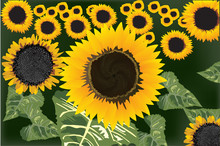 yellow sunflowers field illustration