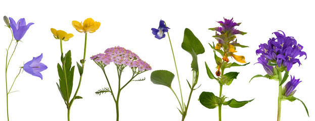 six wild flowers isolated on white