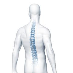 Rücken mit dem Röntgenbild der Wirbelsäule