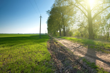 Country road through green fields and rows of trees in spring