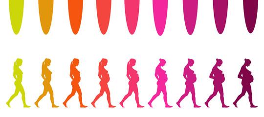 évolution d'une grossesse