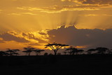 Fototapety Sunset in Africa with bird perching in