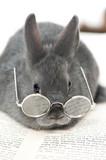 Fototapety Kaninchen mit Brille