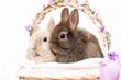Kaninchen im Korb