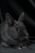 Kaninchen Portrait