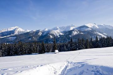 Polish Tatra mountain from Rusinowa Glade