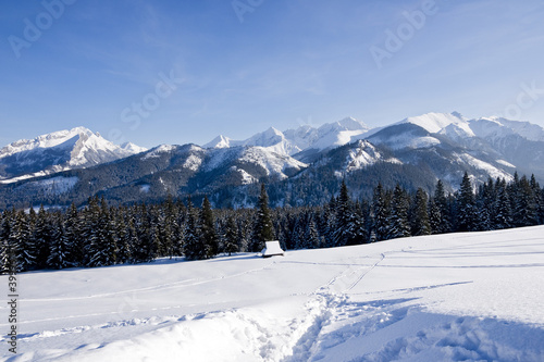 Polish Tatra mountain from Rusinowa Glade