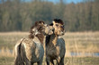 Hugging wild horses in winter