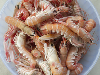 Scampi in the pot