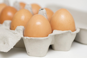 Chicken brown egg closeup