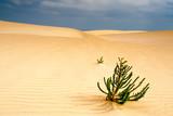 Fototapeta Sahara - wakacje - Pustynia Piaszczysta