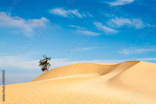 Fototapeten,wildnis,sand,sanddünen,sanddünen