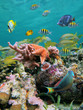 Sea-life colors