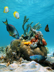 Water surface and marine life