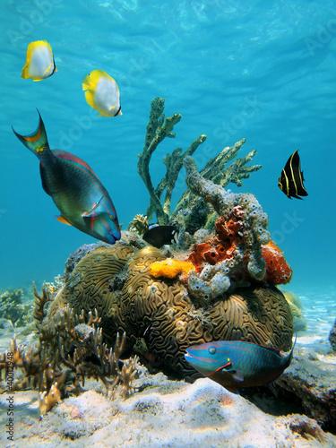 Fototapete Schön - Life - Unterwasserlandschaft