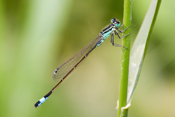 dragonfly on green background