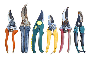 Six old Secateurs