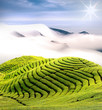 Dramatic clouds and tea garden for background or texture use