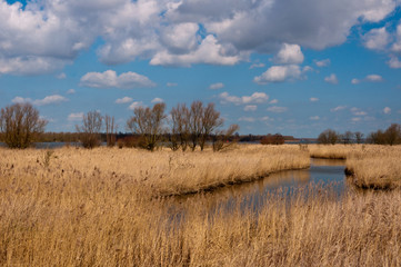 Colorful landscape with a creek and reeds