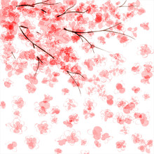 Tle kwitnących japoński wiśniowe drzewo