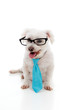 Pet dog wearing a neck tie and glasses