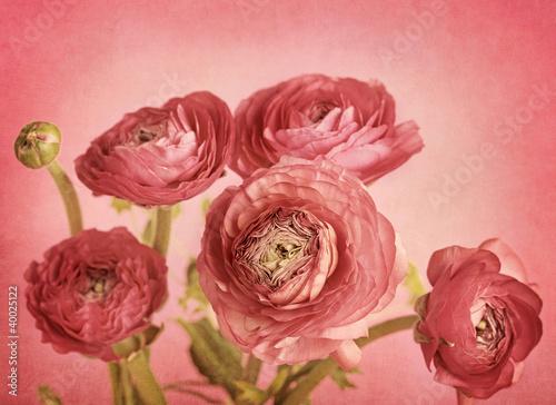 Ranunculus - 40025122