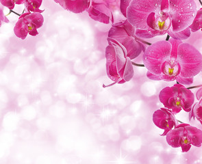 Orchid flowers with water drops, greetings card