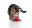 British kitten playing red mouse isolated