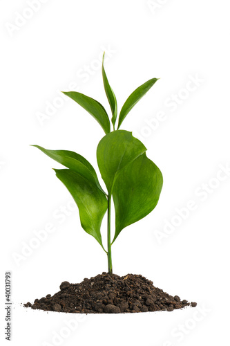 Heap dirt with a green plant
