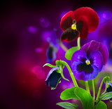 Fototapety Spring Flowers Pansy over Black
