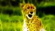 Cheetah Fractal Rendering